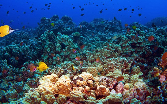 Reef fish at Molokini
