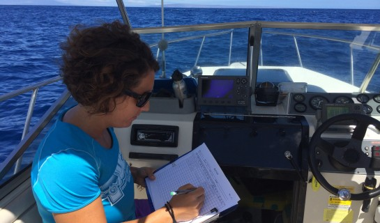 Visual surveys of Hawaiian spinner dolphins conducted off Maui and Lanai
