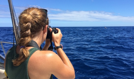 Photo documentation of Hawaiian Spinner dolphin