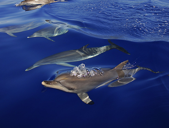 Dolphins in Portugal