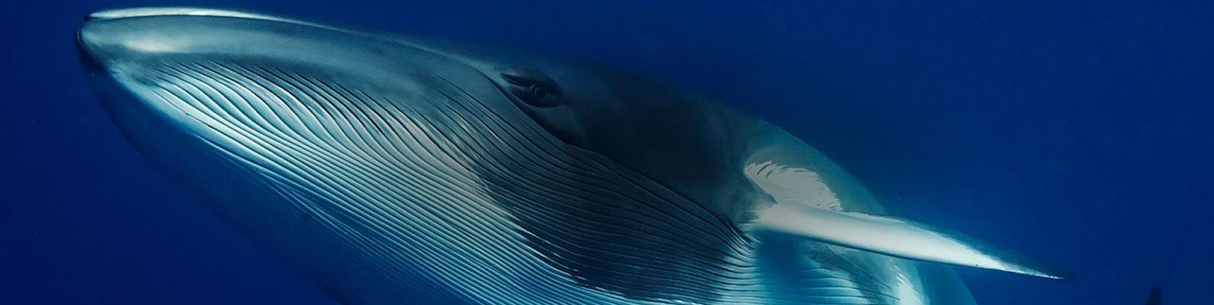 whale-slide